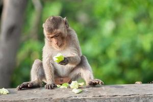 singe mangeant des fruits photo