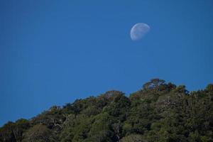 lune et arbres