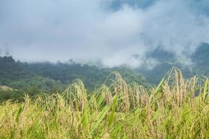 riz et brouillard