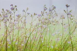 délicates fleurs violettes