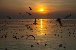 troupeau de mouettes au coucher du soleil photo