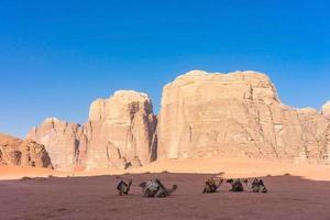 Paysage désertique avec des chameaux dans le Wadi Rum, Jordanie