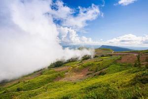 brouillard couvrant une colline photo