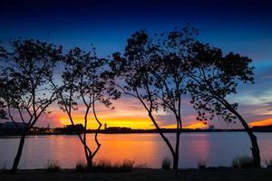 silhouettes d'arbres au coucher du soleil photo