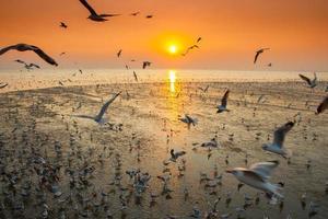 mouettes volant au coucher du soleil photo