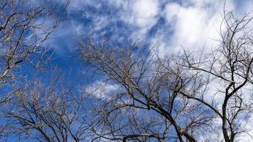 arbres d'automne sans feuilles sur un ciel bleu avec des nuages blancs en arrière-plan photo