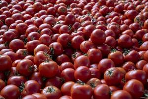 tomates à vendre dans un marché