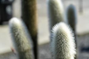 gros plan d'une plante de cactus photo