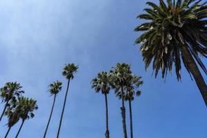 palmiers et un ciel bleu