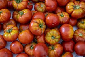 Close up de tomates biologiques à vendre sur le marché