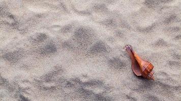 coquillage dans le sable photo