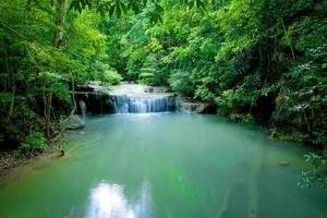cascade dans la forêt verte photo