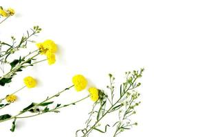 fleurs jaunes sur fond blanc