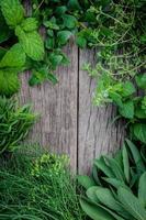 cadre d'herbes sur bois photo