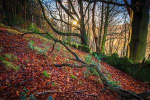 arbres nus avec des feuilles colorées sur le sol à côté de la paroi rocheuse photo