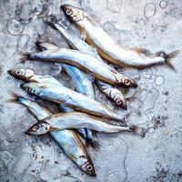 tas de poisson shishamo photo