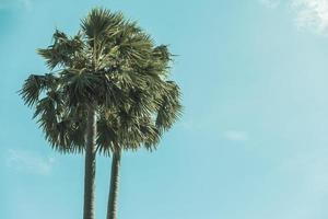 cocotiers