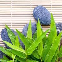 pierres et bambou photo