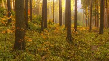 scène automnale dans la forêt photo