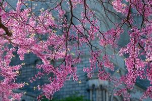 printemps à saint louis