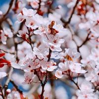 belle fleur rose au printemps photo