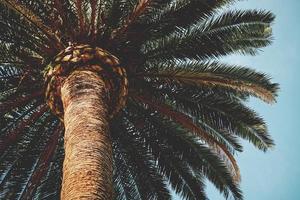 un palmier et un ciel bleu au printemps