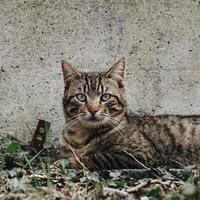 un beau portrait de chat errant