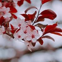 plante fleur rose dans la nature au printemps