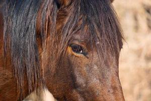 un beau portrait de cheval brun