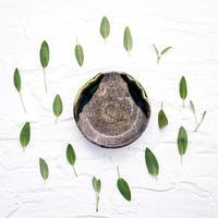 feuilles de sauge entourant une assiette en céramique photo