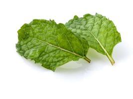 feuilles de menthe sur blanc