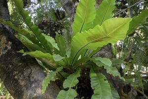 plante de banane verte dans le jardin photo
