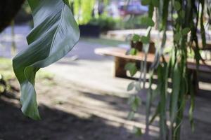 feuille de bananier vert avec fond flou photo