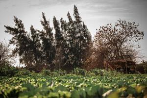 un paysage de campagne en egypte photo