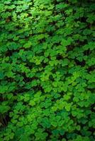 feuilles vertes sur sol brun