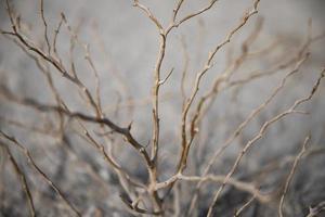 branches d'arbres sans feuilles dans le désert