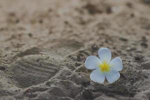 fond de sable de mer et fleur blanche photo