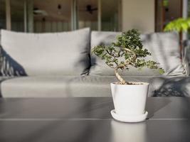table d'espace libre avec plante verte