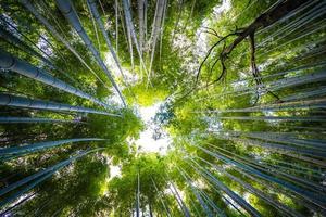 Belle forêt de bambous à Arashiyama, Kyoto, Japon photo