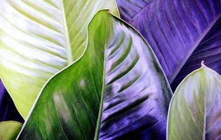 fond de texture de feuilles bleues et violettes photo