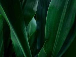 fond de texture abstraite naturelle de feuilles vertes photo