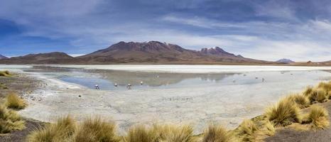 laguna hedionda en bolivie photo