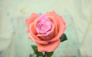 médium acrylique couleur fluide coulant, dégoulinant, remplissant sur une rose photo