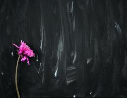 Fleur pourpre rose sèche sur fond de peinture abstraite noir et blanc