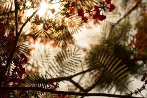 coucher de soleil sur la feuille tamisée