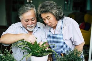 Couple de personnes âgées parler ensemble et planter des arbres dans des pots