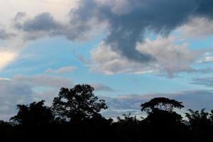 silhouette de paysage d'arbres photo