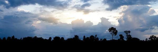 silhouette de paysage d'arbres dans la soirée photo