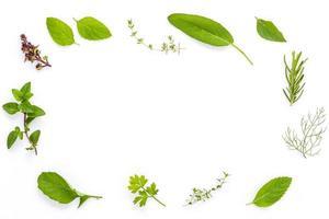 herbes en cercle photo
