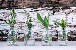 herbes pour huiles essentielles photo